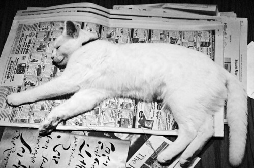 newspaper and cat
