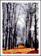 Camino sin fin / Endless way. (www.jordiarmengol.net (Xip)) Tags: espaa topf25 topv111 1025fav interestingness spain topf50 topv333 europe 100v10f xip eps1 votadaconeps ecd camprodon catalunta lfstecnica lfsarte lafoodelasemana 50club