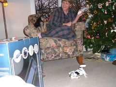 12/25/05 - My Parents' House: Lottie and Mom (mavra_chang) Tags: christmas dogs robots chihuahuas christmas2005 maltese yorkshireterriers lottie christmasday christmasday2005 robotdogs robodogs morkies