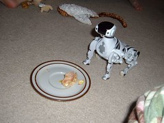 12/25/05 - My Parents' House: Me, Cari, and Megan (mavra_chang) Tags: christmas family me robots christmas2005 christmasday christmasday2005 robotdogs robodogs