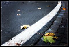 Strada autunnale - by Iguana Jo