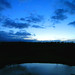 Treetops reflections at dusk