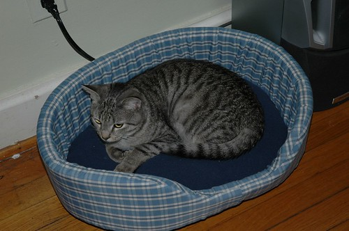 Neville in HIS bed