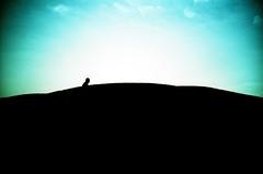 walk across (poopoorama) Tags: seattle 15fav film silhouette tag3 taggedout washington lomo lca xpro tag2 tag1 kodak crossprocess hill fremont 200 elitechrome gasworkspark letsplaytag elitechrome200