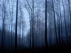 Magic forest: Blue (Sameli) Tags: cameraphone christmas wood morning blue trees winter light shadow sky mist cold tree nature topf25 mobile misty fog forest germany landscape lost sadness lights landscapes thringen still cool scary woods topf50 skies peace shadows silent sad k750i hill dream foggy eerie calm thuringia creepy dreaming hills spooky german silence dreams land horror fade dreamy nightmare fading k750 dreamlike scape hush forests rhythm scapes nightmares wartburg eisenach thringer thuringer primevalforestgroups pffog pfblue