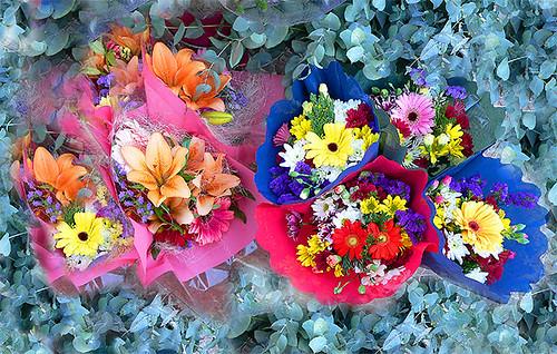 La floristeria / Flower shop
