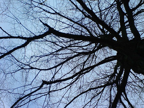 lime tree branches winter