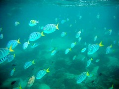 Snorkeling at Koh Racha Yai Island