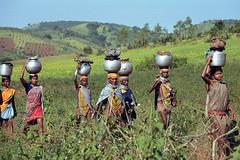 Bonda #3 (foto_morgana) Tags: india orissa bonda tribes people
