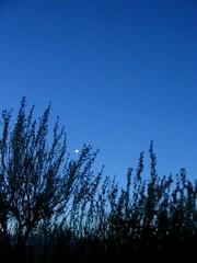 Moon over Sagebrush (MaureenShaughnessy) Tags: nightphotography winter sky cold night dark montana seasons nocturnal utata helena nightsky thebigsky nightphotos celestial wintercolors coldseason afterdusk lightisalive waterisalive seasonalrhythmswinter bigskylullaby