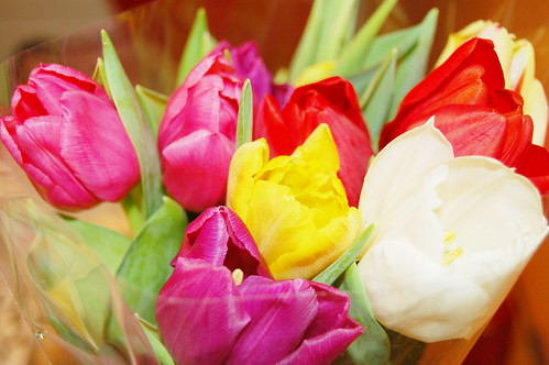 Tulips for Jenny (Copyright Hanna Andersson)
