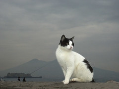 cat in Naples ( - s  ) Tags: sea italy topf25 italia mare zee napoli naples vesuvius vesuvio lungomare itali top40 napels cat1100