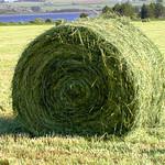 hay there... thumbnail