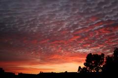 Alameda Sunset