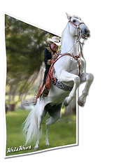 Jumping Out of the Page (Kris Kros) Tags: california ca horse usa white public smile smart cali photomanipulation photoshop idea la us losangeles interestingness cool interesting jump jumping cowboy pix different image faith creative manipulation brain adventure socal brains mostinteresting kris imagine change rodeo imagination top20horsepix really imagemanipulation share whitehorse kk jjj anything important kks patience kkg opportunities outofbounds nofear oob extend extending kros kriskros outofthepage creativeness nonhdr kk2k kkgallery