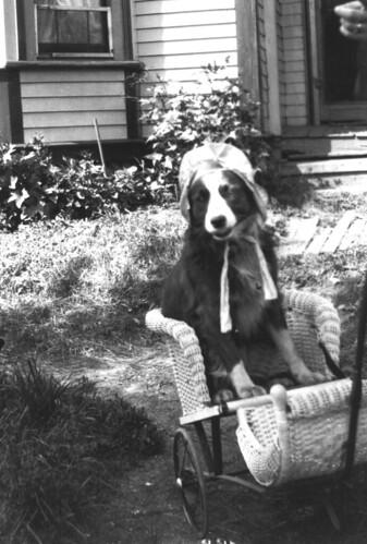 long-suffering dog