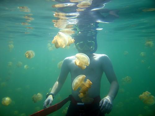 viendo Medusas en Palau