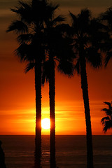 (sosidesc) Tags: ocean california sunset sky orange sun sol beach beautiful fun gold natureza sunsets sanclemente cey nuvem deleteit saveit2 deleteit2 saveit3 saveit1 deleteit3 deleteit4 saveit4 saveit6 saveit7 saveit9 saveit10