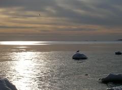 Havet (the Sea) (visulogik) Tags: sea sky sun color ice water clouds silver coast sweden seagull baltic nynshamn