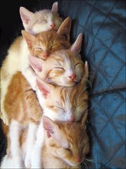Cat Stack (*roes*) Tags: cats baby topf25 animal topv111 topv2222 cat wow amazing topf50 topv555 topv333 kitten topf75 superb lovely1 awesome topv1111 topc50 topc75 great topv999 topv444 kitty topv222 topf300 topc100 topv5555 400 faves topv9999 topv11111 topf150 incredible topv3333 topv4444 topf100 topv666 topf250 topf200 484 topv8888 topv6666 topv7777 topf60 topf400 topc150 topf350 topf175 topf30 topf40 topvaa i500 catstack cc100 3000v120f cotcmostfavorites 6000v240f abigfave cat1000 bestofcats cat13000 cc13000 thecatwhoturnedonandoff