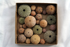 Urchin box - by Here