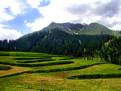 Greenery is the best Scenery (meansmuchtome) Tags: blue trees pakistan sky mountain snow mountains green ice beautiful pine clouds scenery asia meadows glacier imagine greenery kashmir nwfp lalazar
