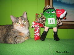 Happy Valentines Day (Foto Cats) Tags: autumn pet cats pets playing cute animal animals cat fur hilarious paw furry kitten katten kat feline funny play kittens gatos 2006 gato calico gata felino felines katze paws furryfriday tortishell gatitos productplacement sillycat cutecat cutecats funnycat katt gatito goofycat playfulcat playfulcats goofycats