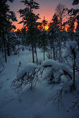 sky on fire! (Berat) Tags: winter red sky sun snow nature canon suomi finland ilovenature eos europe lappland eu lapland scandinavia pick10 lappi berat 4nature ginordic1