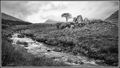 Delphi Co. Galway (rosemarysedgwick) Tags: travel trees ireland galway water beautiful scenery delphi blackwhitephotos skancheli