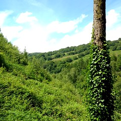 Valley of green (robjvale) Tags: trees green walk valley bushes