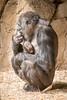 2015-05-29-10h49m51.BL7R1097 (A.J. Haverkamp) Tags: germany zoo momo gorilla duisburg nordrheinwestfalen ayo dierentuin westelijkelaaglandgorilla canonef100400mmf4556lisusmlens pobstuttgartgermany pobduisburggermany dob03061982 httpwwwzooduisburgde dob27052015