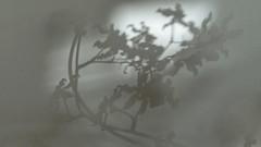 sombras 005 (Parchen) Tags: muro textura luz branco wall sombra preto cor sombras texturas parede nuances monocromtico suavidade transio parchen carlosparchen