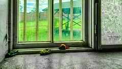 29.7.2015  Keskiviikko-iltapiv  Wednesday-afternoon Turku bo Finland (rkp11) Tags: summer abandoned suomi finland wednesday afternoon estate turku sommer july prison julio verano juli  t juillet hdr sommar kes artexhibition luglio bo 7 2015  lato lipiec lumia    heinkuu abandonedprison taidenyttely  vankila kakola 7 iltapiv valtio keskiviikko  lninvankila countyprison  southwestfinland hdrefexpro2 lumia1020 hylttyvankila kakolanmkiturku 2972015 turunlninvankila tilataidekeskustelu