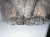 IMGP1705 (d_fust) Tags: animal cat kitten gato katze 猫 macska gatto fust kedi tier 貓 anak katt gatito kissa kätzchen pfoten gattino kucing 小貓 고양이 katje кот γάτα γατάκι แมว yavrusu 仔猫 का skorpi बिल्ली बच्चा
