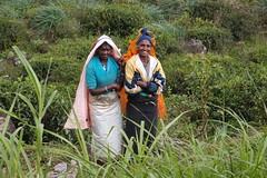 (Carrascal Girl) Tags: train costume women tea native ella railway transportation srilanka traintravel teagarden kandy teaplantation teaestate picker teapickers kandytoella