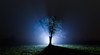 The Light (Rob Pitt) Tags: tree fog night phtography wirral cheshire field foggy mist torch lightpainting misty darkness 750d canon rob pitt oak torchlit backlit