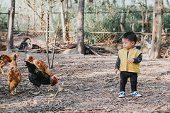 Yestin (Randy Wei) Tags: mitakon zhongyi speedmaster people sunlight outdoors chicken countryside woods farm animal sun winter kids children