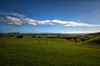 Perspective & Providence (Kevin_Jeffries) Tags: newzealand kevinjeffries waitaki waimate hills farm fenceline perspective sheep green blue providence nikon nikkor d7100