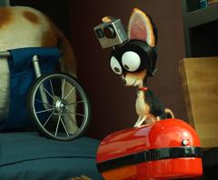 (LegionCub) Tags: universalstudiosorlando secretlifeofpets parade puppet themepark outdoors florida animal dog