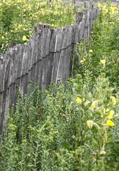 la barrière (jchaffaux) Tags: paysbasque jaune fleur barrière