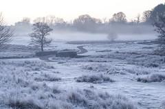 Bradgate Frost (John__Hull) Tags: frost bradgate park newtown linford frosty mist nikon d3200 trees grass ferns bridge countryside leicestershire landscape uk view breath taking landscapes deer