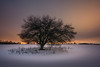 Snow Silence (Christian Heller) Tags: snow stille nacht night schnee tree trees himmel feld brandenburg herzfelde