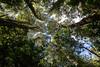 Primeval forest (abielefeld) Tags: 2017 chile urlaub primeval forest tagua park alerces refuge patagonia taguatagua