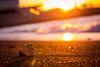 Tateyama city / Canon EOS60D:Canon EF-S60mm F2.8 Macro USM (telenity) Tags: japan tateyama landscape coast ocean sunsets eos60d danboard amazon mini 日本 館山 夕暮れ 夕焼け ダンボー アマゾン ミニ ニャンボー
