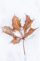 cold days (svenru89) Tags: leaf blatt kalt cold frost frostig frosty white snow schnee eisig ice braun brown orange yellow gelb winter canon5dmark3 tamron90mmvc tamron makro