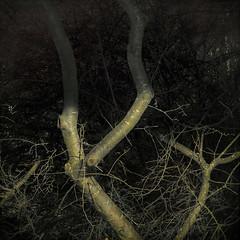At Night We Lit (Samuel Poromaa) Tags: urban night winter squarephotography samuelporomaa poromaa