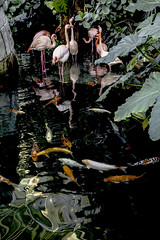 Exotic nature. (Chris, photographe de Nice (French Riviera)) Tags: nature végétation vegatation animal exotic tropique tropical fish poissons pélicansroses contemporaryart contemporain modernart artmoderne