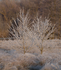 2016_12_0514 (petermit2) Tags: winter frost clumberpark clumber sherwoodforest sherwood nottinghamshire nationaltrust nt