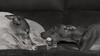 _DSC1389-1SE_1 (faithful_whippets) Tags: nikon d7100 hunde windhunde whippet ital windspiel