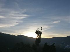 The observer (rufaro) Tags: tree ooty sunrise hills clouds